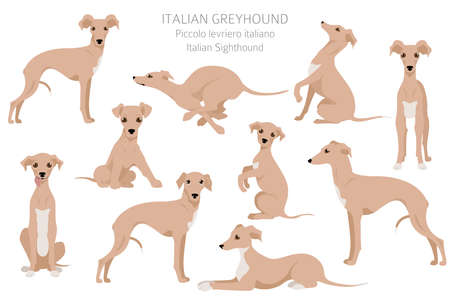 Italian greyhound clipart. Different poses, coat colors set. Vector illustration Vector Illustratie