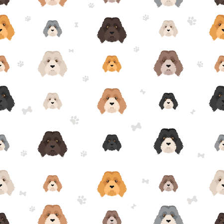 Labradoodle seamless pattern. Different poses, coat colors set. Vector illustration