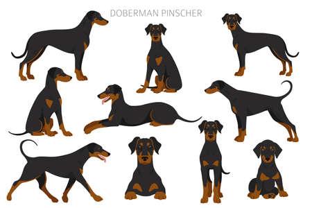 Doberman pinscher dogs clipart. Different poses, coat colors set. Vector illustration