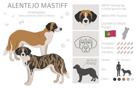 Alentejo mastiff all colors clipart. Different coat colors set. Vector illustration
