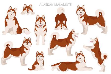 Alaskan malamute all colors clipart. Different coat colors and poses set. Vector illustration Vector Illustration