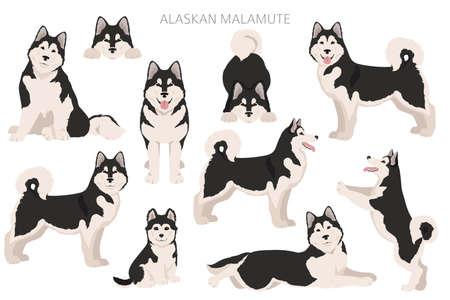 Alaskan malamute all colors clipart. Different coat colors and poses set. Vector illustration