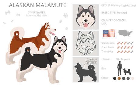 Alaskan malamute all colors clipart. Different coat colors and poses set. Vector illustration Vektorové ilustrace
