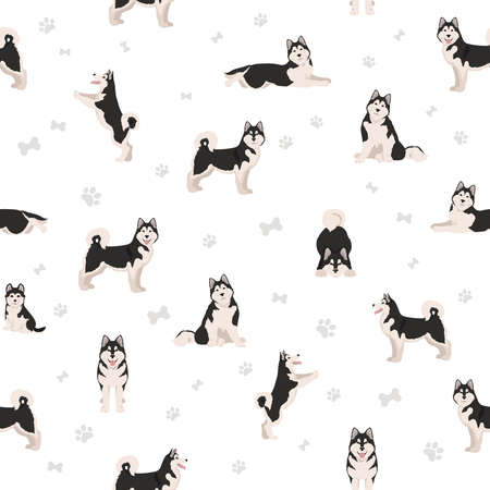 Alaskan malamute all colors seamless pattern. Different coat colors and poses set. Vector illustration