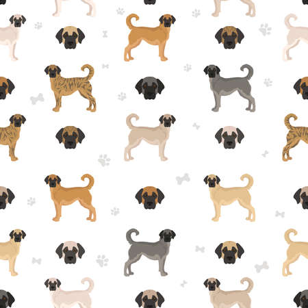 Anatolian shepherd all colors seamless pattern. Different coat colors and poses set. Vector illustration