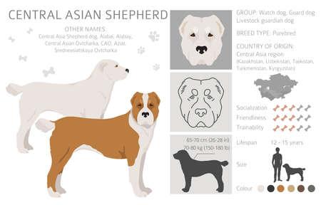 Central asian shepherd clipart. Different poses, coat colors set. Vector illustration