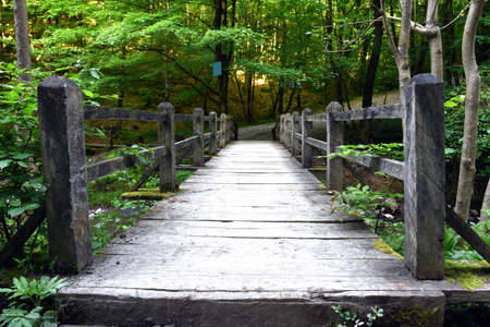 woods: Wooden bridge on a hiking trail in the woods Stock Photo