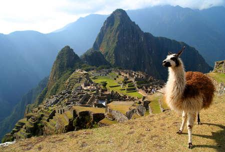 llama: Con lama di fronte antico inca citt� di Machu Picchu
