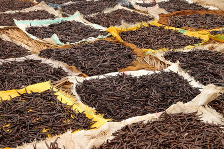 Vanilla pods collected and left to dry on the sun Stock Photo