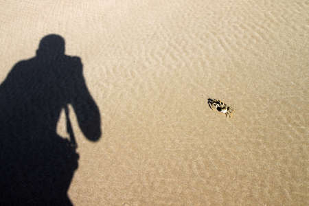 Shadow of a man taking photo of crab photo