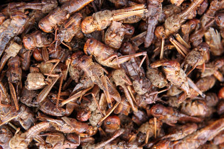 Fried locust on sale on the african village market Stock Photo - 8522361