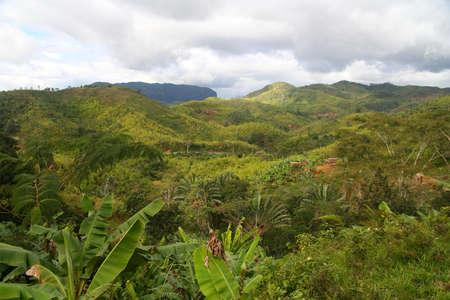 Aerial view of the dense Madagascar rainforest