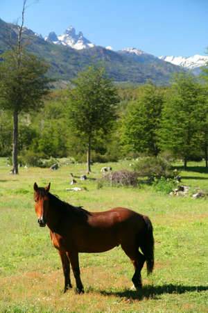 Horse on a green pasture on Carretera Austral in chilean Patagonia photo