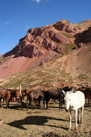 White horse in the mountains, Andes, Argentina Stock Photo - 10284839