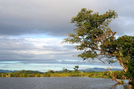 River delta in the northern part of Madagascar near Maroantsetra Stock Photo - 12337248