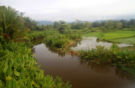 Wide river flowing through jungle in northern Madagascar photo
