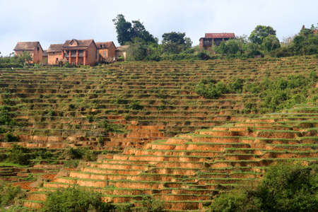 northern african: Small village on top of a rice field near Ambalavao in Madagascar