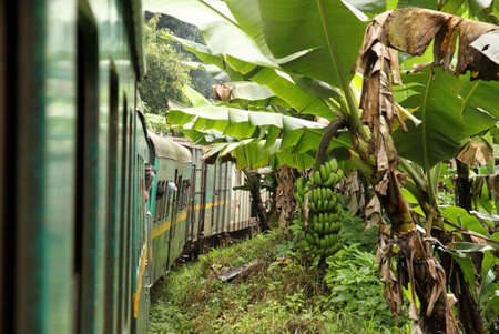 Famous Fianarantsoa to Manakara train going through lush rainforest photo