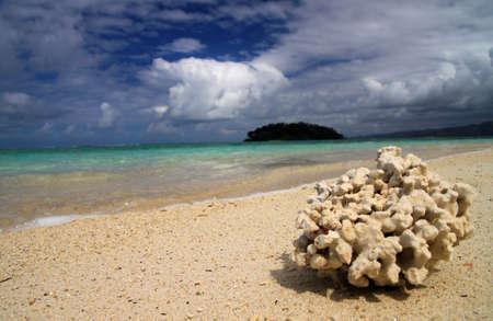 nosy: Single coral on the beach on the Nosy Antafa  Stock Photo