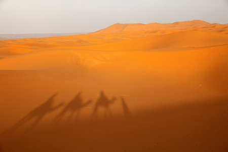 undeveloped: Shadow of a caravan on a stunning sand dunes of Sahara desert in Merzouga, Morocco Stock Photo