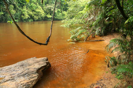 Natural swing over river in the Malaysian jungle in Taman Neggara National Park photo