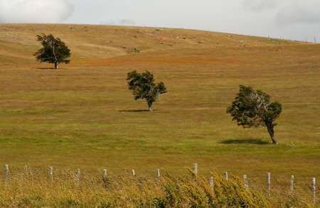 Three trees standing out on the grassland in Patagonia photo