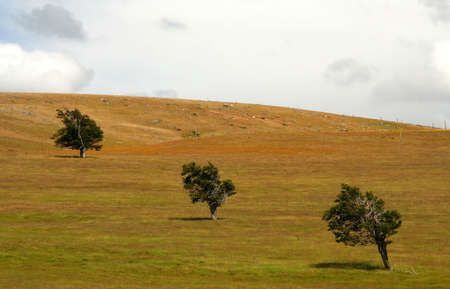 Three trees standing out on the grassland in Patagonia Stock Photo - 14738899