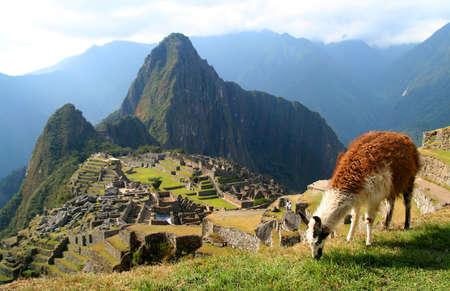 Llama in de voorkant van het oude inca stad Machu Picchu