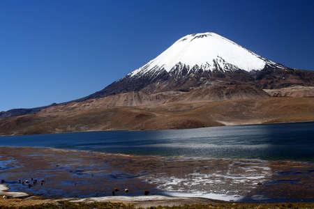 꼭대기가 눈으로 덮인: 칠레에있는 공원 Lauca에 덮인 Parinacota 화산