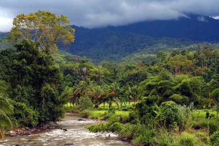 Rivier stroomt door dichte tropische jungle op het Indonesische Sumatra Stockfoto