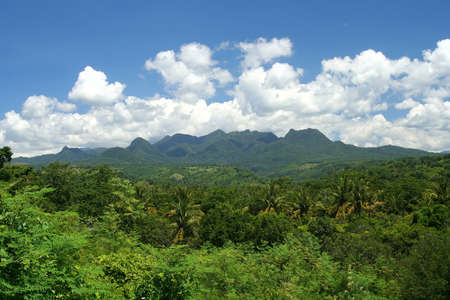 Dense tropical jungle on the Indonesian Sumbava island photo