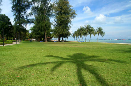 Shadow of a palmtree on the Singaporean coast photo