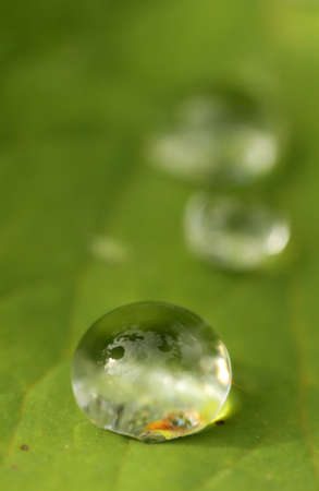 Raindrop on a green leaf in the garden photo
