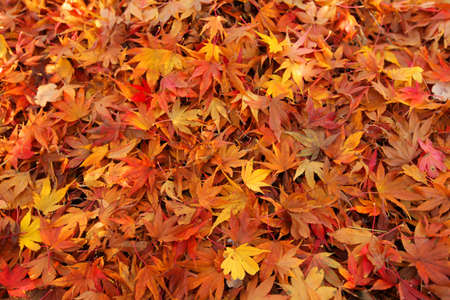 Multicoloured fallen leaves on the ground in the park in autumn Stock Photo - 17383957