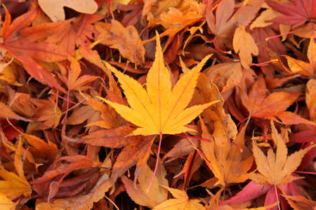 Golden leaf on the ground in the park in autumn Stock Photo - 17383951