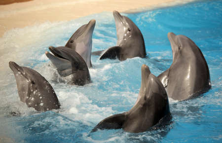 Dolphins dancing in water during show in Loro Parque in Tenerife, Spain Imagens