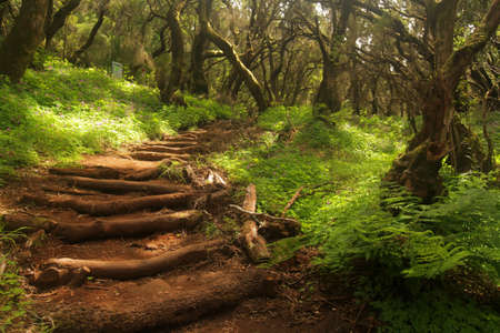 Footpath in the rainforest in Garajonay national park, La Gomera, Canary Islands, Spain