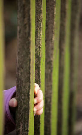 Baby hand holding to a wooden plank of a fence photo