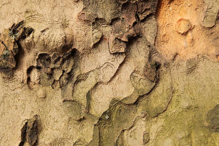 Close up tree bark pattern and texture photo