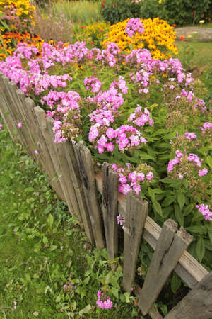 Pink impatiens and yellow echinacea flowers behind a wooden garden fence photo