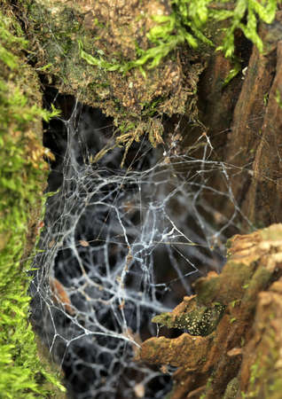 Chaotic spider web on a tree trunk in a forest photo