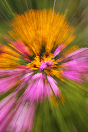 zoomed:  Zoomed picture of a meadow full of very colourful flowers