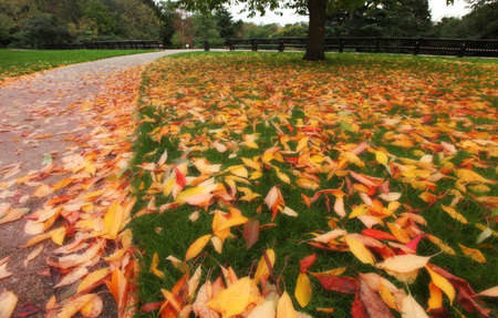 Multicoloured fallen leaves on the ground in the park in autumn photo