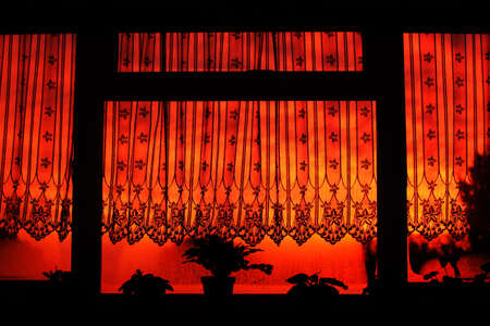 Background of curtain and plants in the morning sunrise window light photo