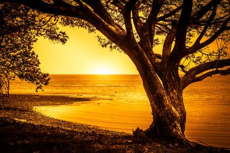 Single tree on the shore of a lake Stock Photo