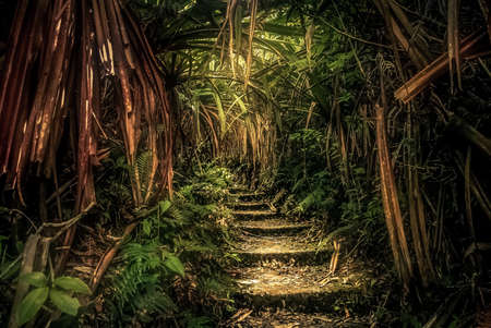 Path throught the jungle in northern Sumatra, Indonesia