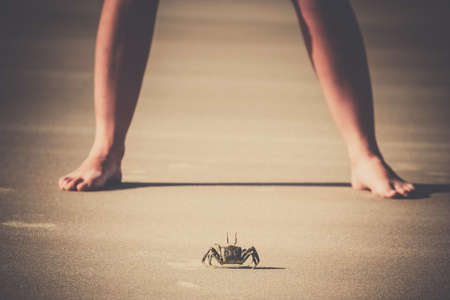Crab standing in front of a girl on the beach on the Madagascar coast