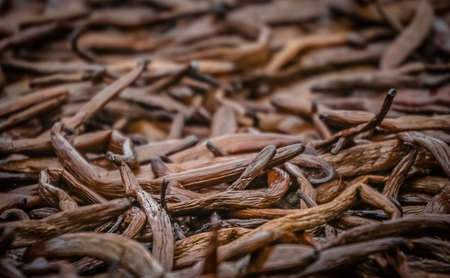 Close up of vanilla pods drying on the sun