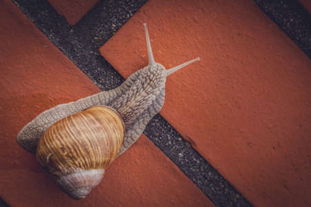 Land snail climbing up the brick wall photo