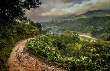 Path through dense madagascar rainforest near Masoala National Park photo